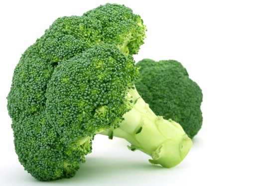 can-dogs-eat-broccoli.jpg